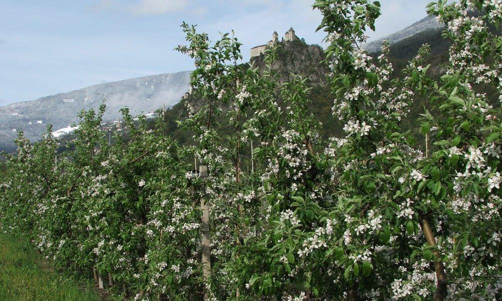 L'Alto Adige in primavera: un autentico piacere