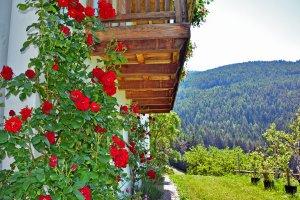 Feilerhof Klausen in Südtirol 09
