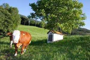 Familienurlaub auf dem Bauernhof 01